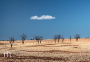 Winton, Queensland, Australia, Outback Queensland, Drought, Trees, Cloud, Fine