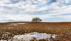 Landscape image of single mangrove off shore at Toolakea Beach, Q, Australia
